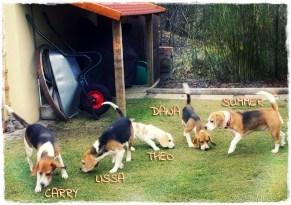*sniffsniff* mit Gasthunden im Garten, Jänner 2014
