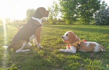 Kleiner blonder Bub und sein Bodyguard...