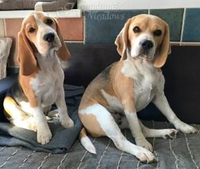 Charming Marcie & Brave Barnaby. Mama & Sohn
