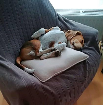 Hundebettchen de luxe ;)