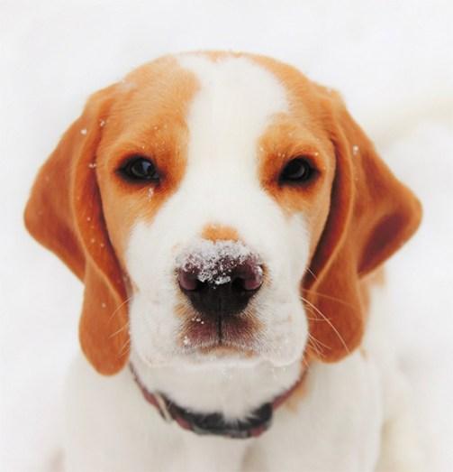Agent Rossi liebt den Schnee!