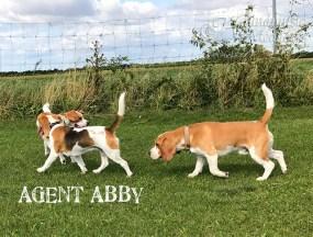 Abby sagt wo's langgeht *lol*