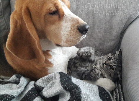 Barny, der Katzenversteher