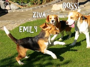 3 Agenten: Emily, Ziva, Rossi, Sommer 2017