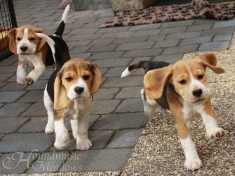 Barnaby, Tara, Ronja