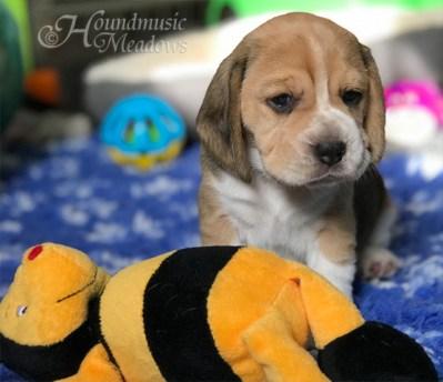 kleines Bienchen
