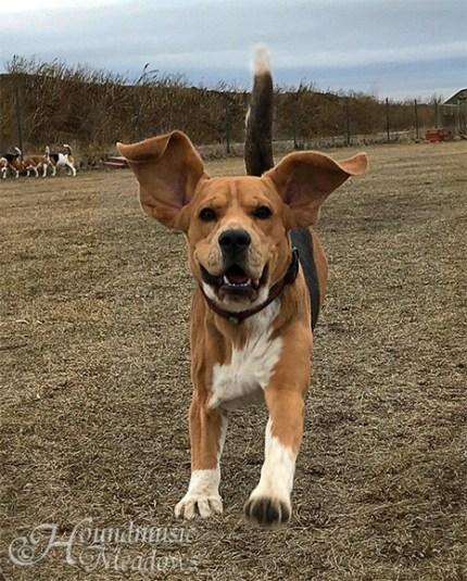 Flatteröhrchen auf der Beaglewiese