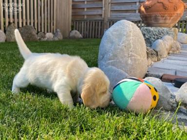 hmmm... RUND bist du Ball aber nicht?!
