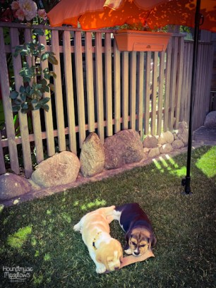 Charly & Henry unterm Sonnenschirm