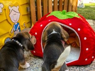 ein Erdbeerhaus?