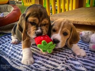 Erdbeere? Was ist Erdbeere?