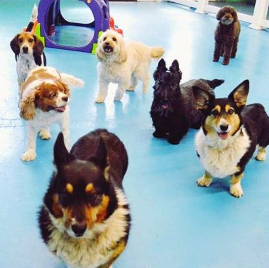 Recession-Proof Pet Industry Just Keeps Growing