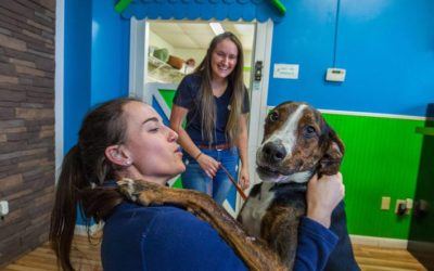 Pet Care Franchise Poised for Exponential Growth in 2020