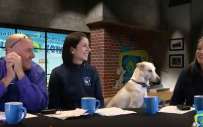 Doggie Daycare Franchise Owner Discusses her Booming Business