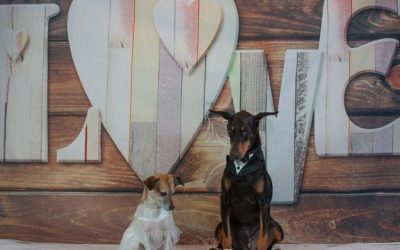 Doggie Wedding Brings in Record Numbers for Pet Care Franchise