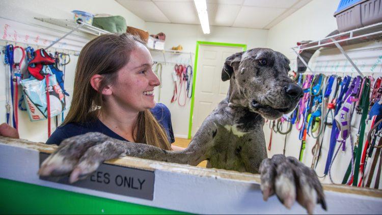Pet-care franchise