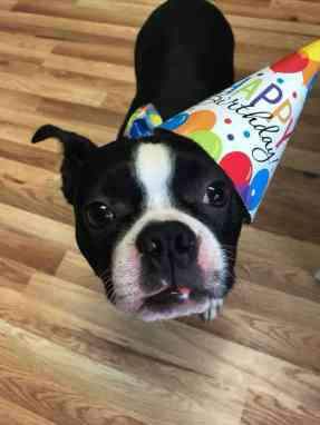 South Jersey Pet Care Franchise Celebrates Anniversary!