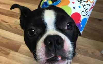 South Jersey Pet Care Franchise Celebrates Anniversary!