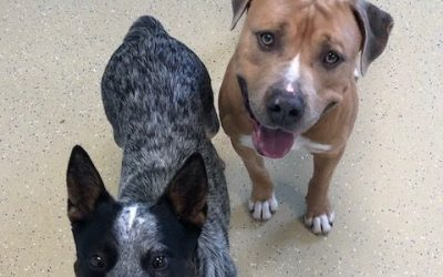 Dog Daycare Franchise Fosters Shelter Dogs