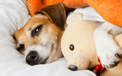 How Much Does a Dog Boarding Business Make?