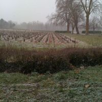 Il neige en Médoc !!!!