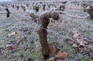 vin medoc gel jan 15 (4)_resultat