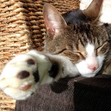 Paw-fect cat