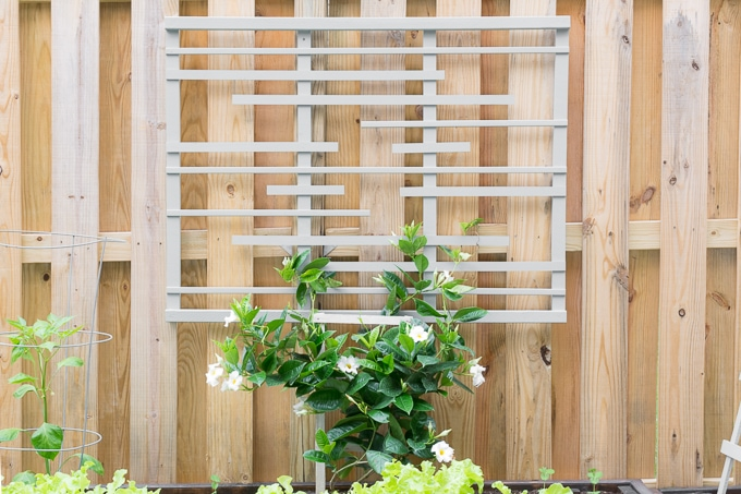 DIY Trellis for Vines: Making a Modern Garden Trellis