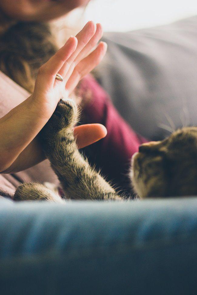amore gatti felici