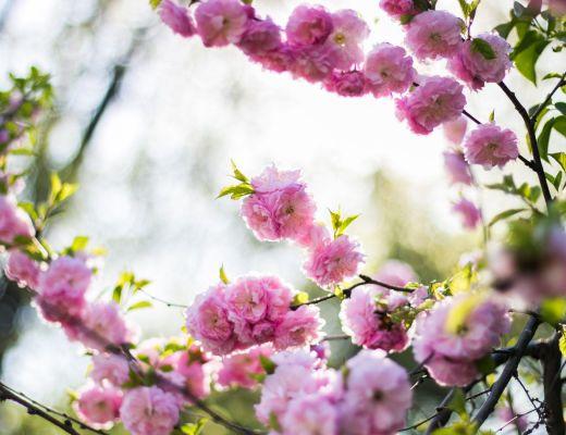 giardino primavera