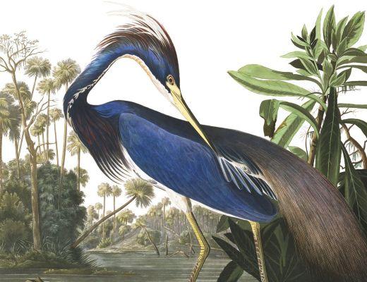 Carta da parati Blue Heron 2