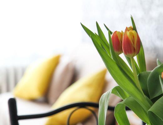 tulipani arredamento