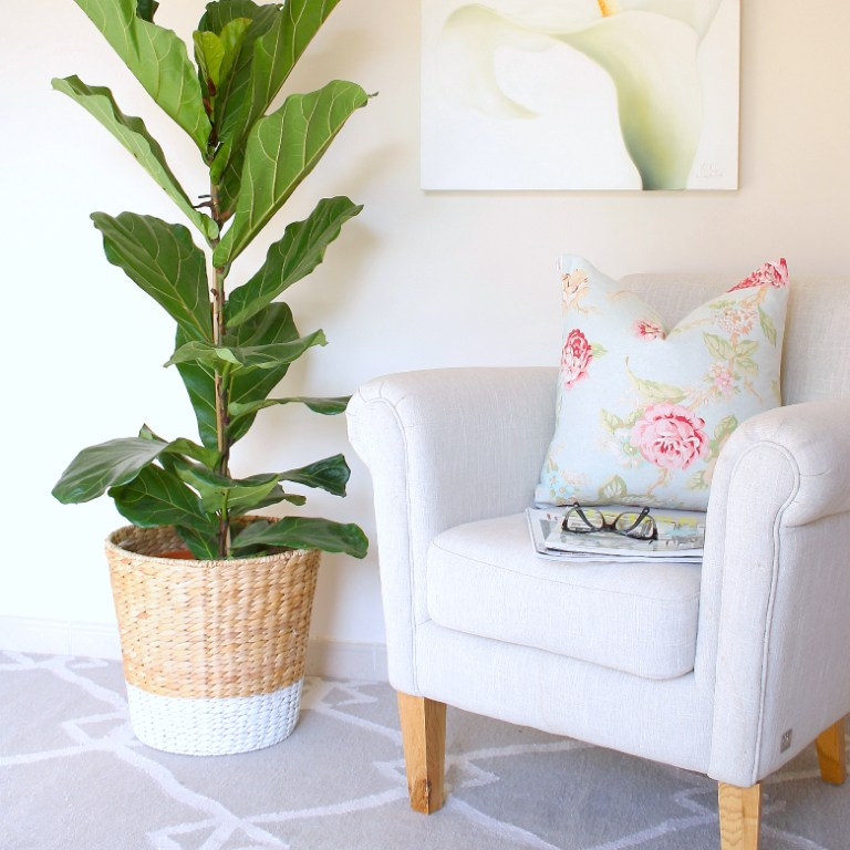 DIY-planter-for-my-fiddle-leaf-fig