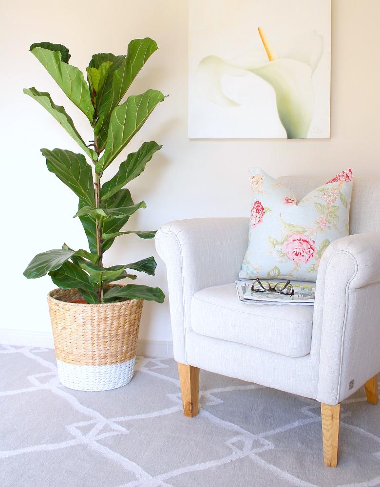 DIY-planter-for-my-fiddle-leaf-fig