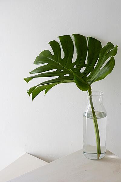 Go green: Beautiful Botanical Arrangements