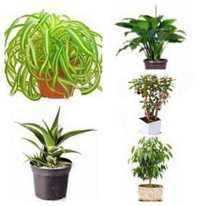 common house plants collage