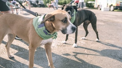4th Annual BARK for BARC Pet Walk 2019