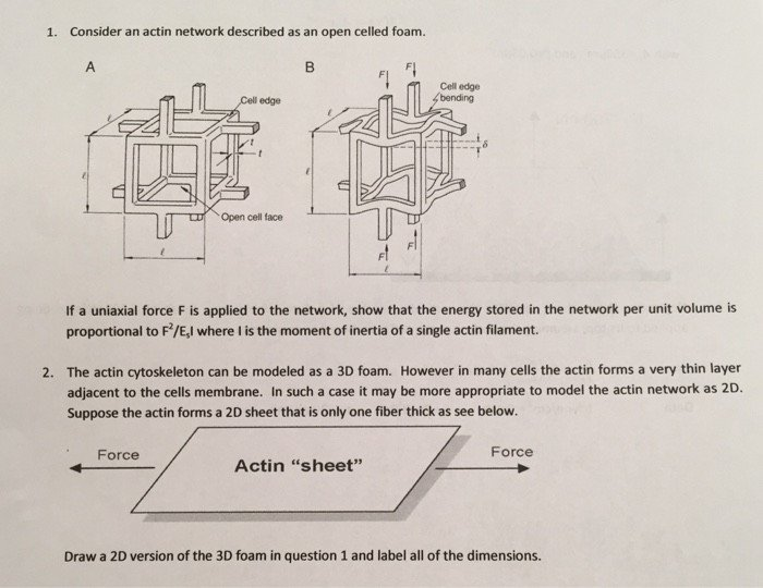 Physics Free Body Drawing Worksheet With Answers