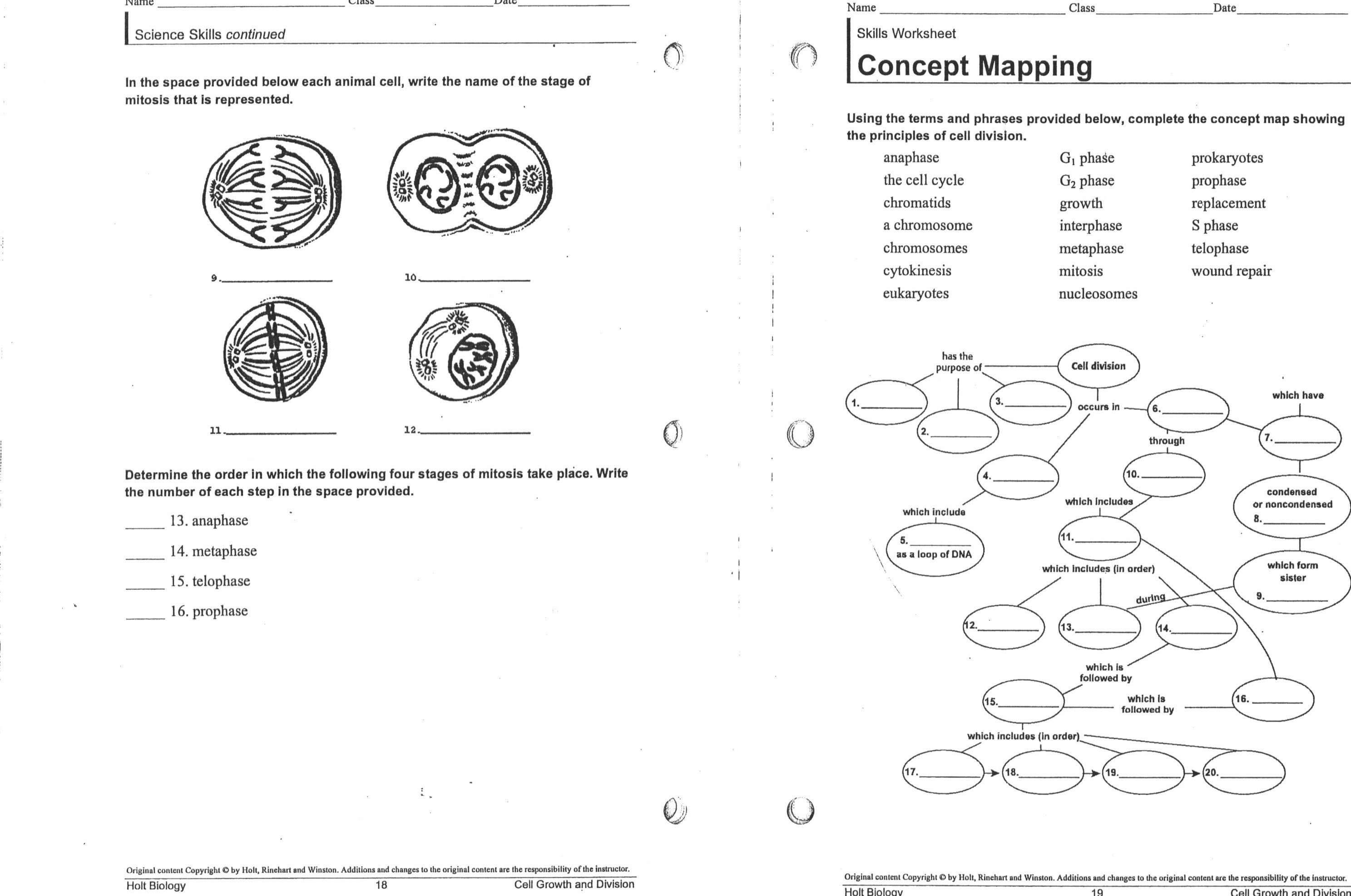 Meiosis Worksheet The Best Worksheets Image Collection