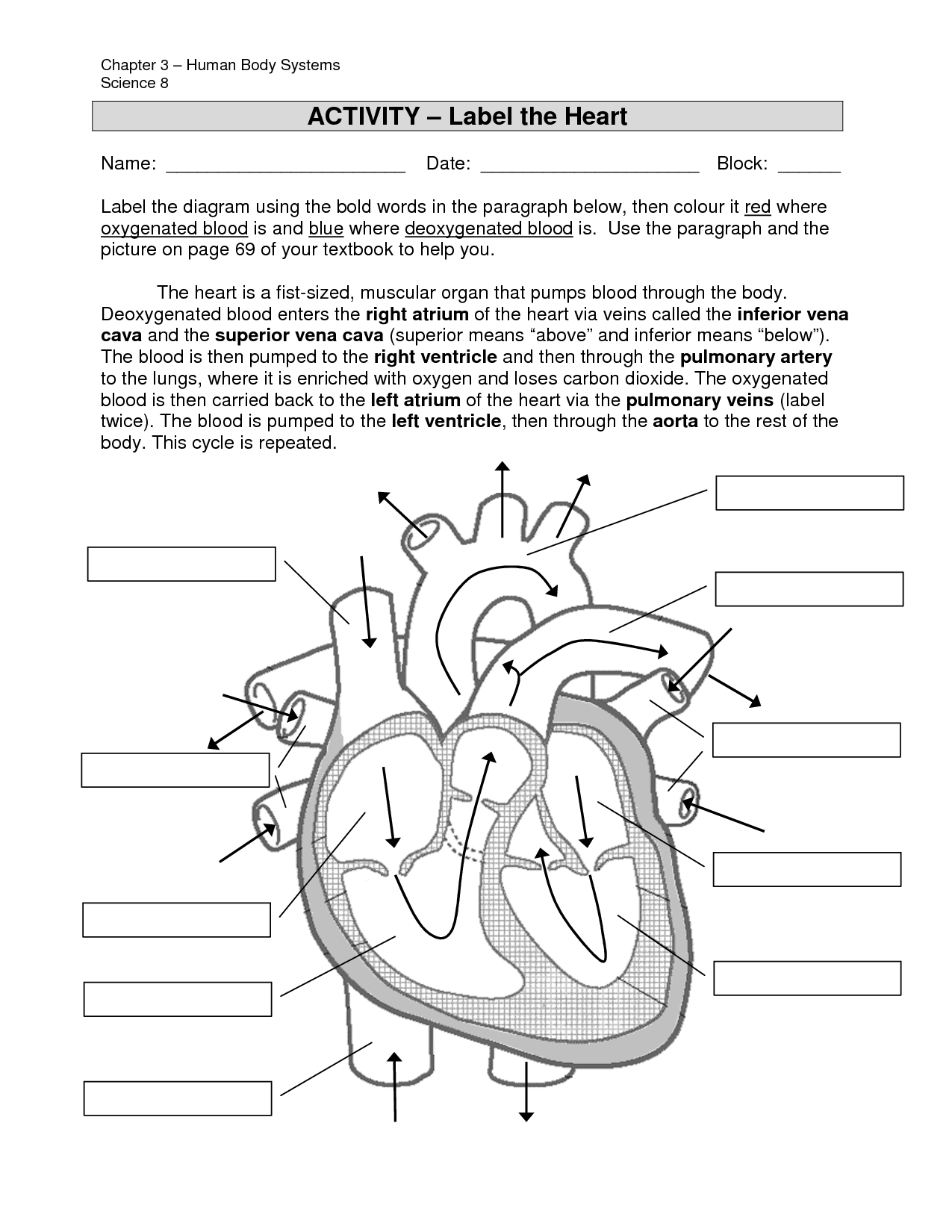 Heart Labeling Worksheet Davezan Structure Of The Heart
