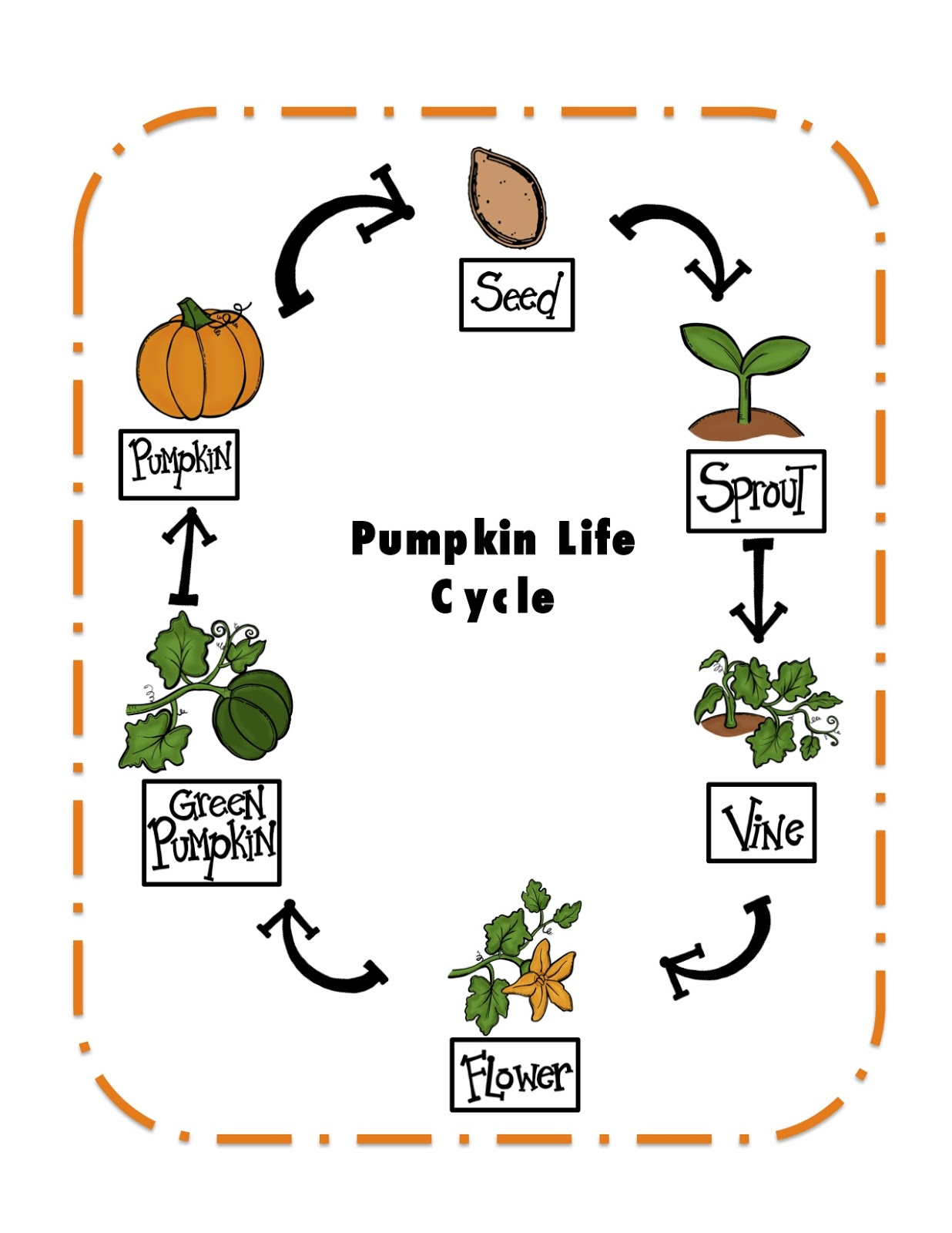 Preschool Pumpkin Life Cycle Worksheet Free