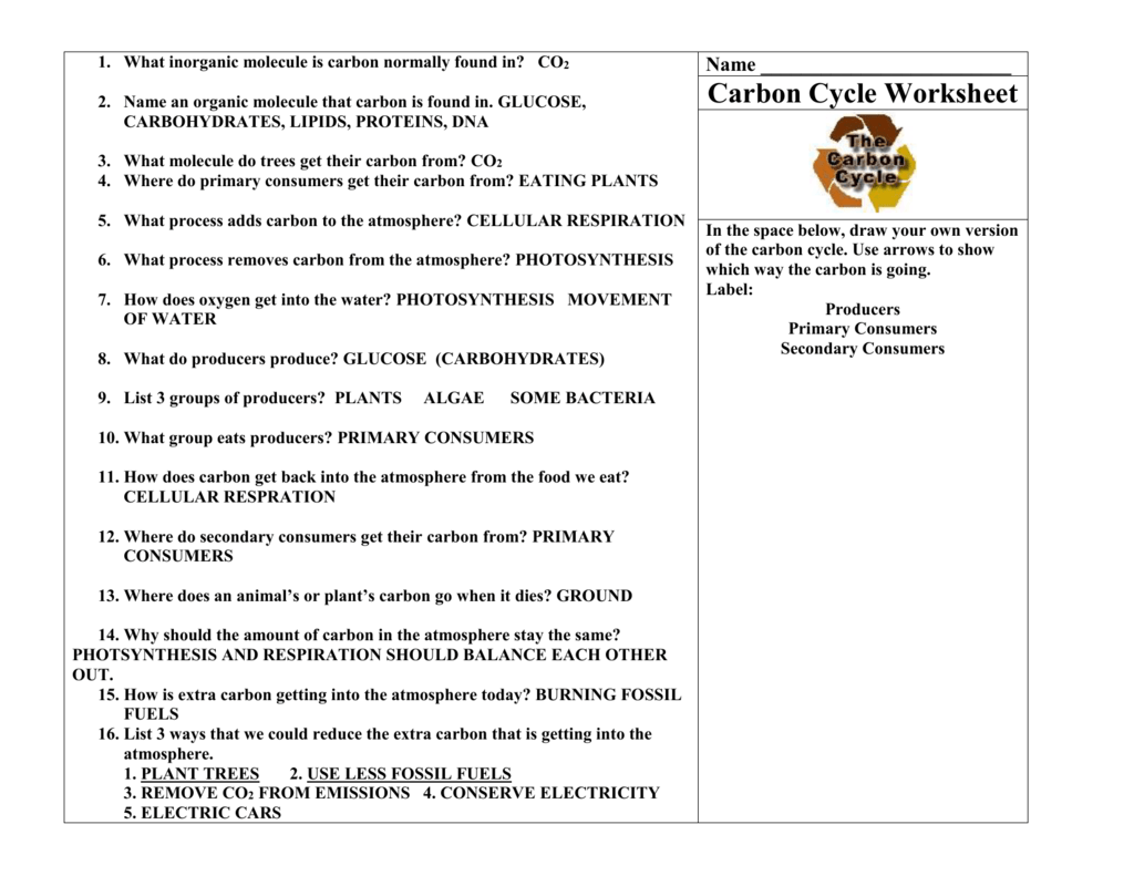 Integrated Science Cycles Worksheet Answer