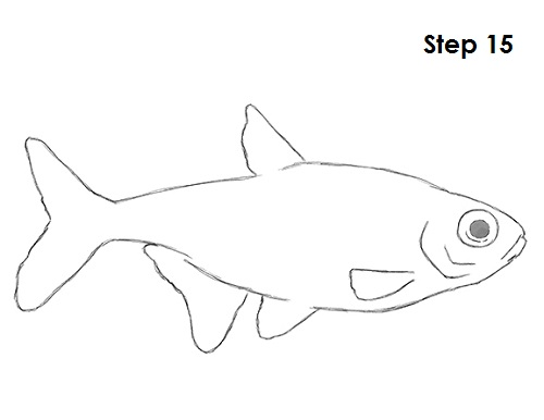 how to draw a neon tetra fish