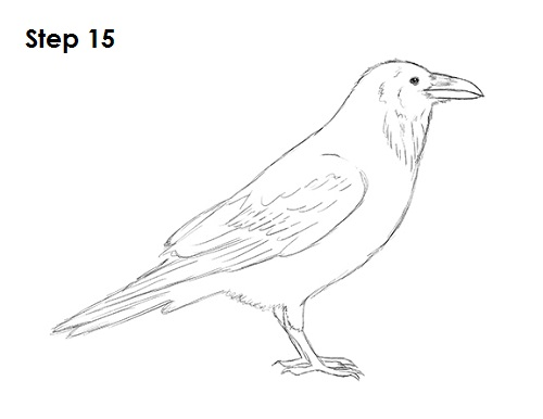 Draw Raven Bird 15