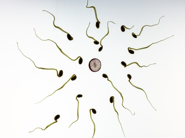 climate change affects male fertility