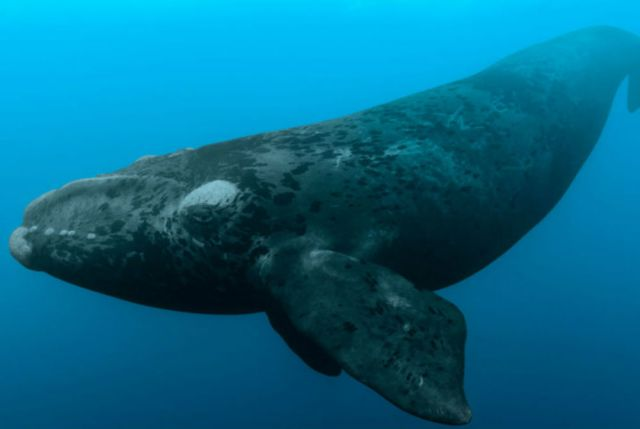 World's Largest Whales