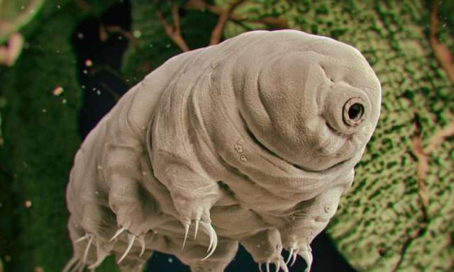 Tardigrades on moon