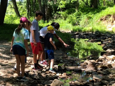 Campers at the Howard County Conservancy's Summer Nature Camp search through streams to find animals.