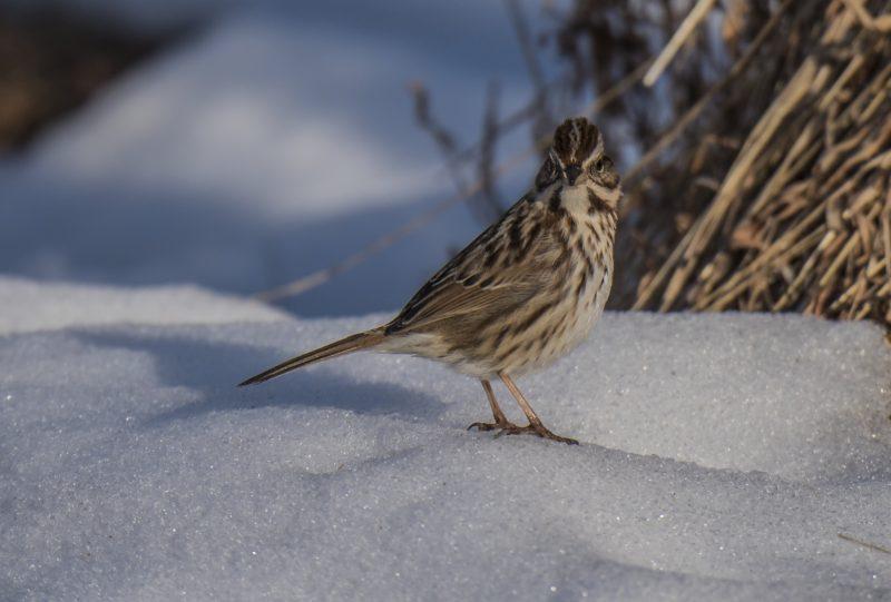 CANCELED: Citizen Science Birding / FREE