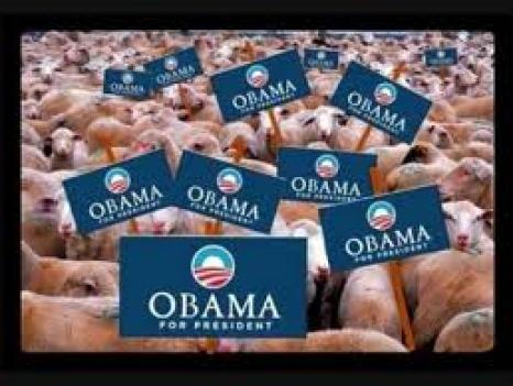 OBAMA'S SHEEP